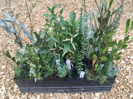Free Plant Giveaway image